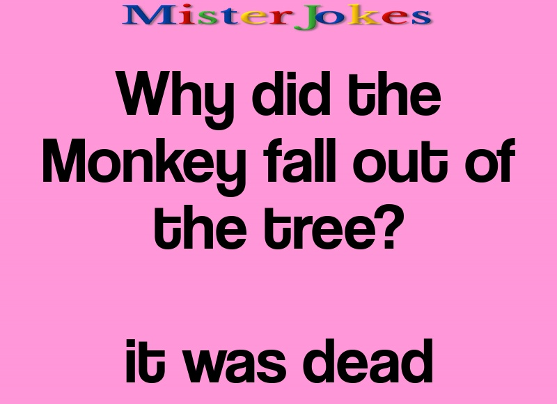 Why did the Monkey fall out of the tree?