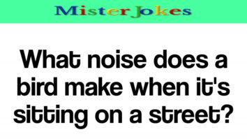 What noise does a bird make when it's sitting on a street?