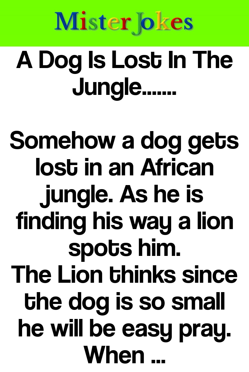 A Dog Is Lost In The Jungle…….