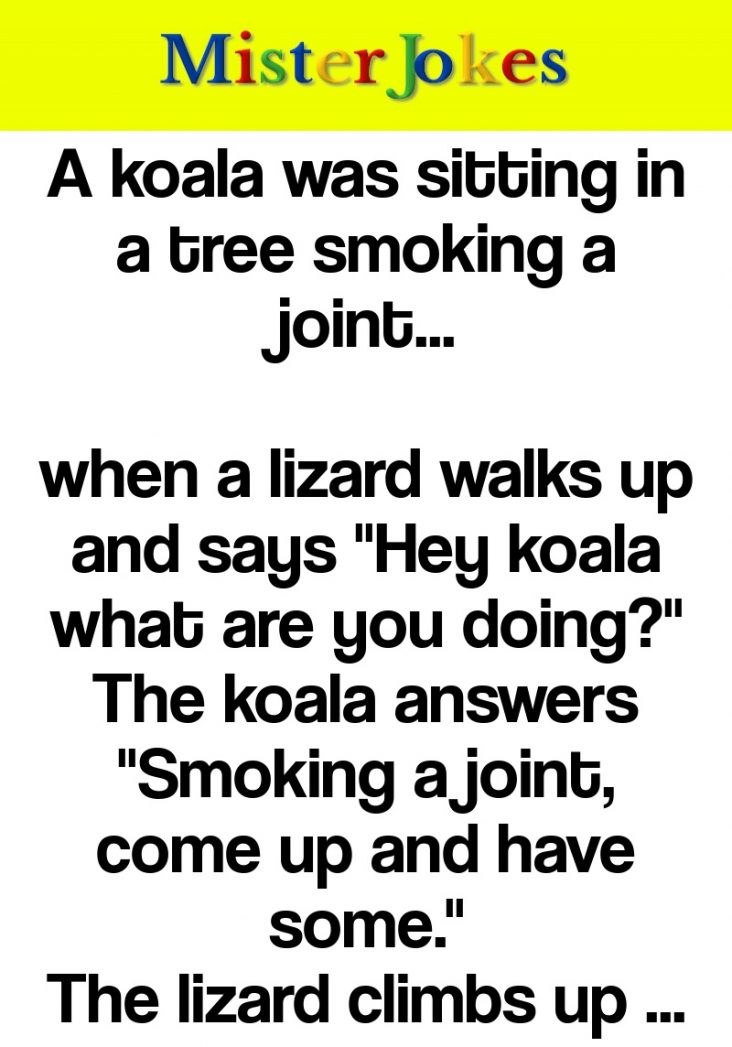 A koala was sitting in a tree smoking a joint…