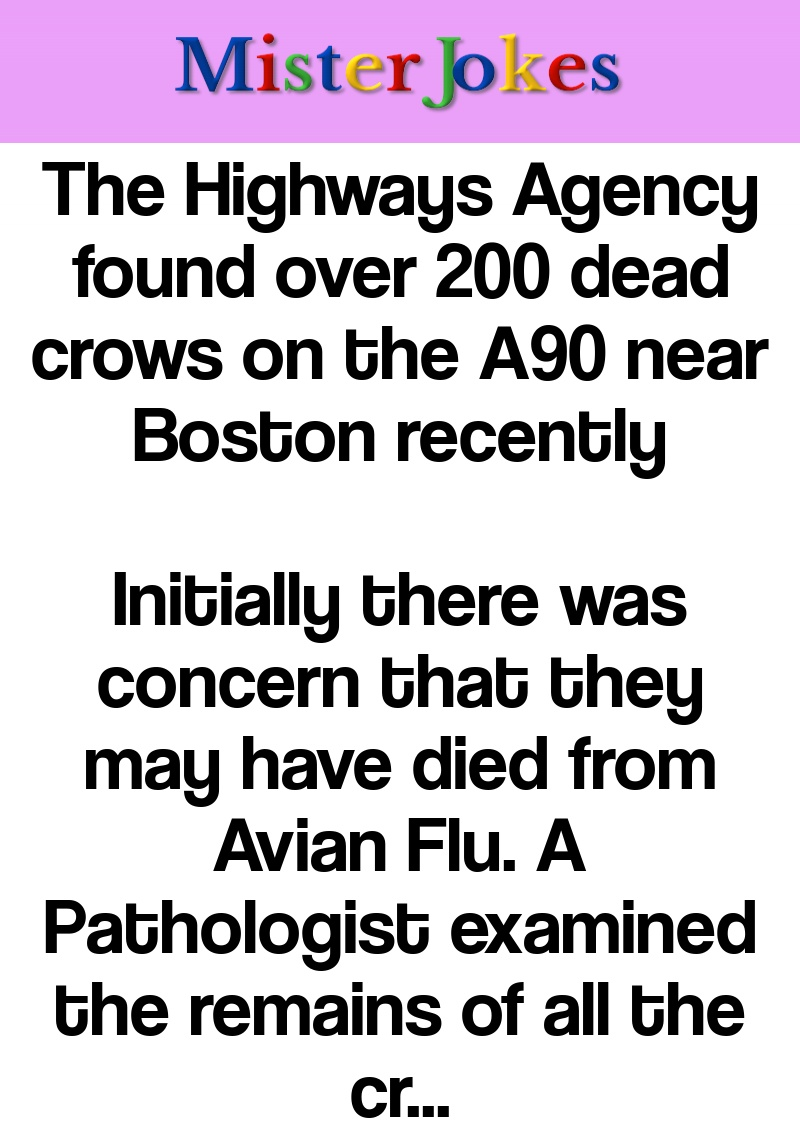 The Highways Agency found over 200 dead crows on the A90 near Boston recently